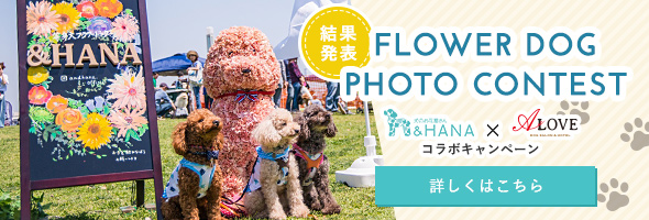 FLOWER DOG PHOTO CONTEST